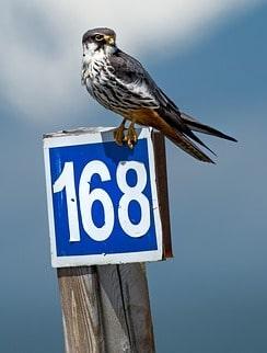 Änglanummer 168